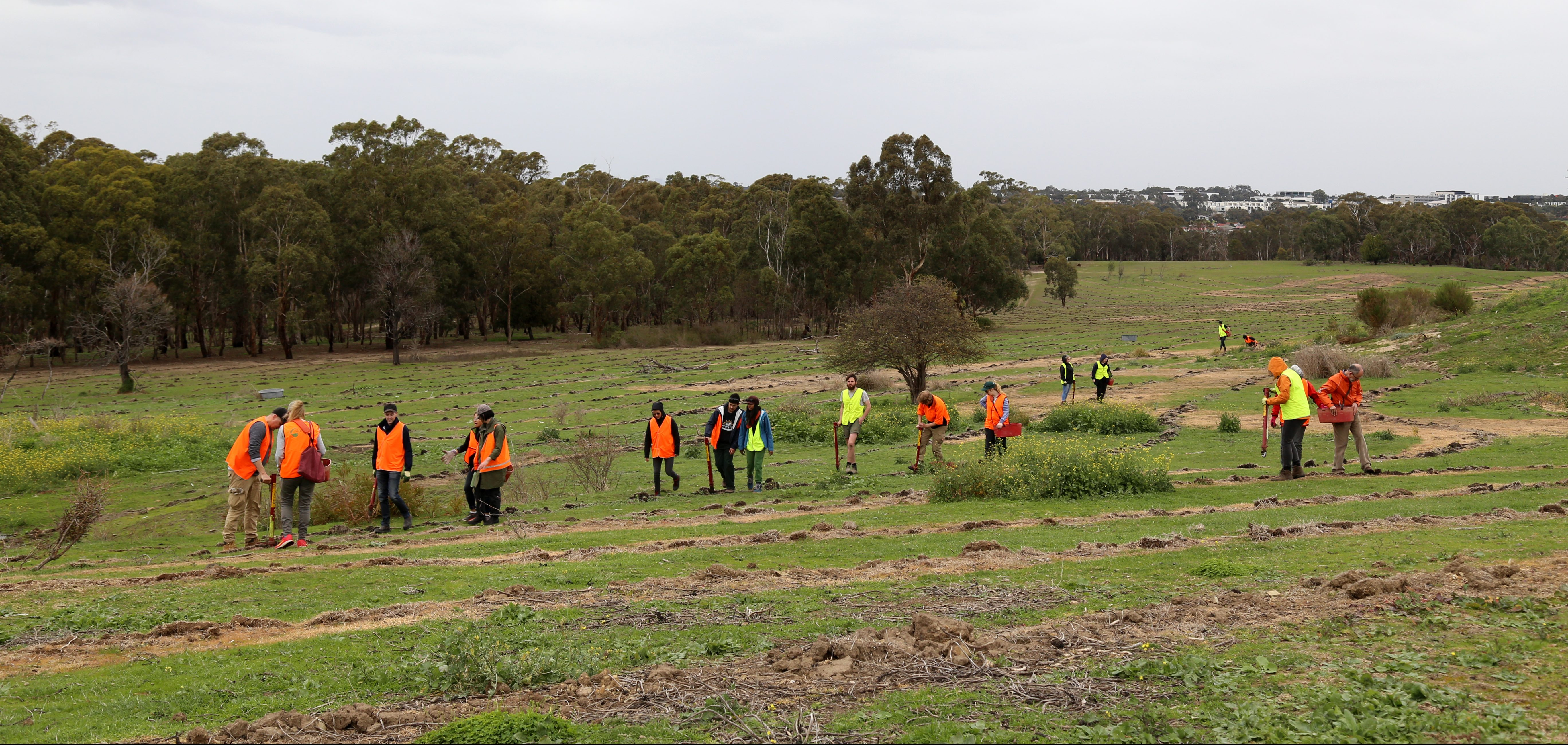 Image of some people in orange hi-vis vests planting trees